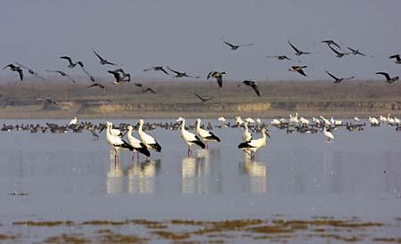 饶河保护野生动物